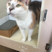 Lou (222324) Reading - Free To A Great Home!