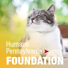 HPA Foundation