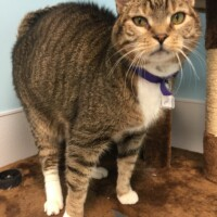 ADOPTED Phil (221572) -Lancaster - Free To A Great Home