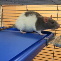 ADOPTED Phyllis (222959) Reading - $10