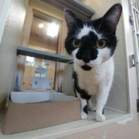 Pippin (222870) Reading - Free To A Great Home